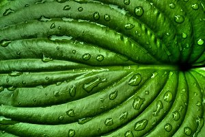 Leaf Texture / Surface