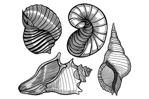 Hand drawn set of various seashell.