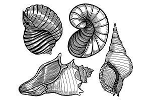 Hand drawn set of various seashell.