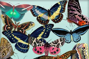 Butterfly Clipart Set - 12 PNGs