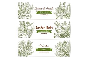 Spices and herbs vector sketch banners
