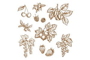 Forest berries and fruits vector sketch icons