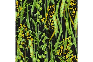 Seamless pattern with herbs and cereal grass. Floral ornament of meadow plants