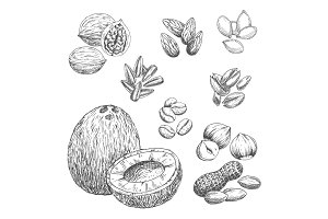 Nuts, grain and seeds vector sketch icons