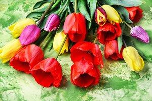 Bunch of spring beautiful tulip flow
