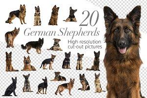 20 German Shepherds - Cut-out Pics