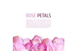 Pink Rose petals border