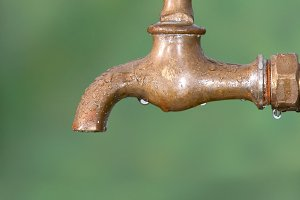 Bird on a faucet