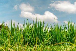 Perfect green fresh grass