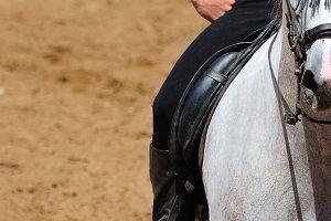 Cowboy Andalusian horse.