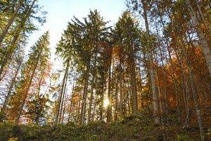 Hallstatt bosque