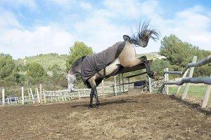 HorseAttack