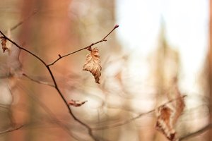 old leaf film style