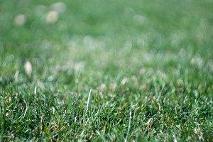 fresh grass field