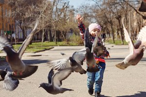Little girl feeds pigeons