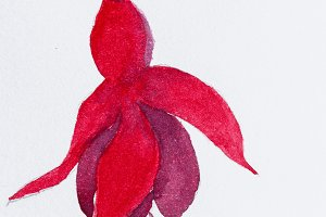 Bellflower flower with watercolor