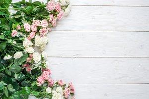 fresh roses on the white