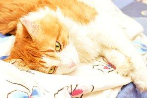 Secrets of cat