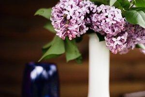 Lilac Stock Photo