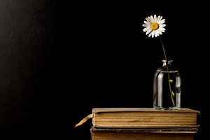 Old books and daisy