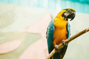 Macaw Parrot sits on a branch