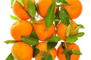 Tangerine. Mandarine. Citrus