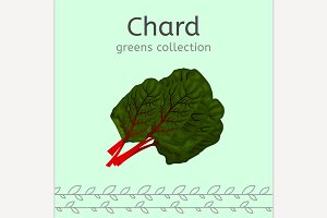 Chard Illustration