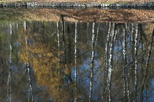 Reflection of autumn trees in a pond