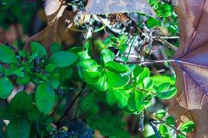Leaf Grass Detail