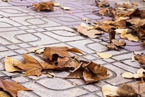 Leaves in the Sidewalk