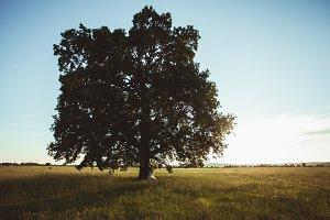 Wedding couple under the tree
