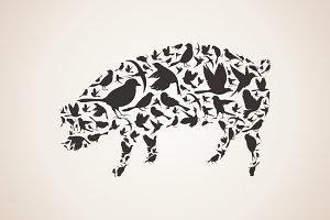 Pig from birds