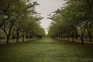 Aisle of Trees in Color