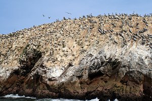 Birds in island