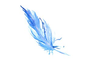 Watercolor bird feather isolated