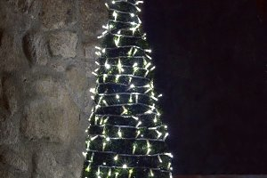 Christmas tree illuminated