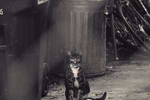 Cat Sitting in Alley