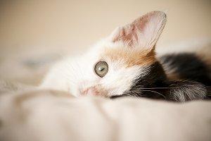Kitten Peek a Boo