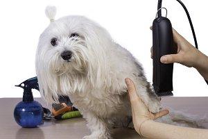 Pet care.