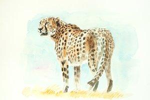 Cheetah watercolor