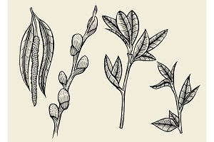 Hand drawn herbal flowers isolated