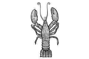 Lobster hand drawn