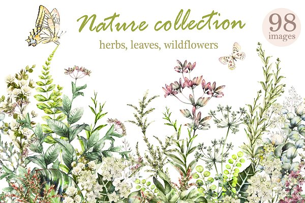 Nature Collection. Wild flowers