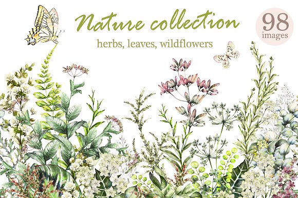 Big Nature Collection