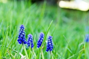Blossom blue flowers. Blooming wildflowers. Funny mood. Spring mood.