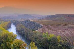 Vineyards in La Rioja.