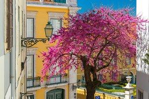 Spring typical Lisbon street, Portugal