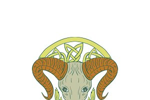 Ram Head Celtic Knot