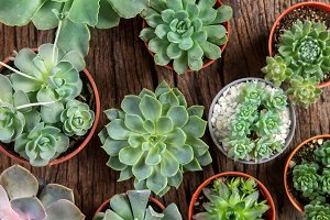 Succulents on top