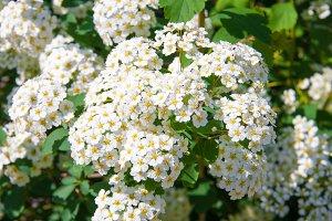 white wild flower in field close up